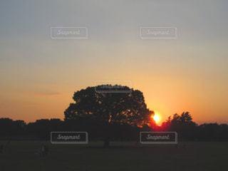夕日の写真・画像素材[1115659]