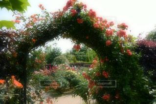 花の都の写真・画像素材[1115663]