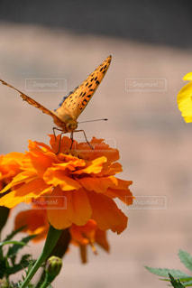 花と蝶の写真・画像素材[1115686]