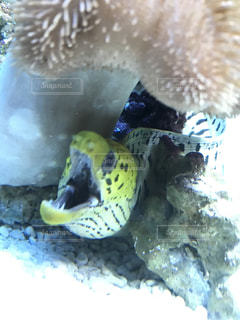 水面下を泳ぐ魚たちの写真・画像素材[1085860]