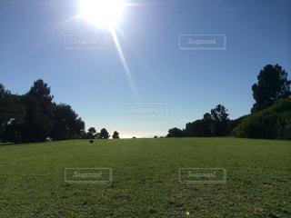 緑豊かな緑のフィールドと太陽の写真・画像素材[1090713]