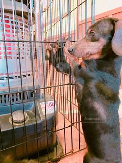 ストーブで温まる犬の写真・画像素材[1086671]