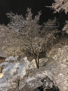森の横に雪の山の写真・画像素材[1086186]