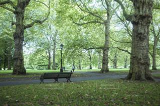 ロンドンの公園ベンチの写真・画像素材[1088455]