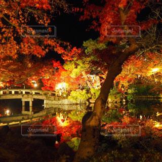 京都の紅葉ライトアップの写真・画像素材[1086262]