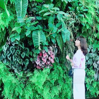 緑の壁に立ってる女の人の写真・画像素材[1086264]