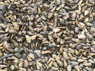 敷き詰められた貝殻の写真・画像素材[1092372]