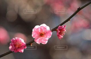 春の訪れの写真・画像素材[1086633]
