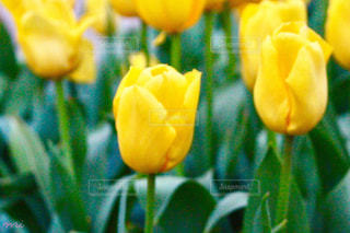 近くに黄色い花のアップの写真・画像素材[1086938]