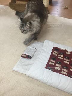 布団と猫たんの写真・画像素材[1087766]