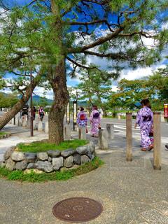 京都の写真・画像素材[1087808]
