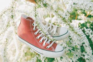 靴と花の写真・画像素材[1086804]