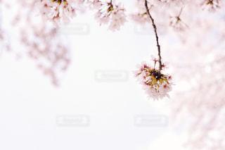 近くの花のアップの写真・画像素材[1112486]