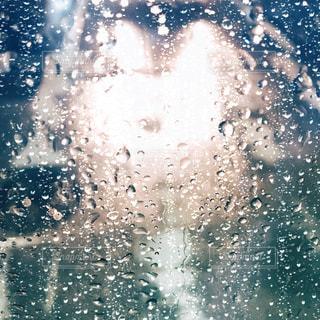 雨の日の写真・画像素材[2298575]