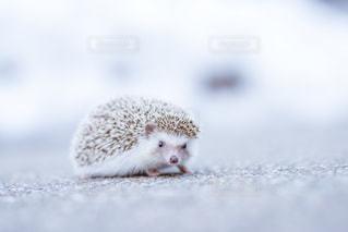 近くに動物のアップの写真・画像素材[1086751]