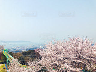 神戸の花見の写真・画像素材[1108730]