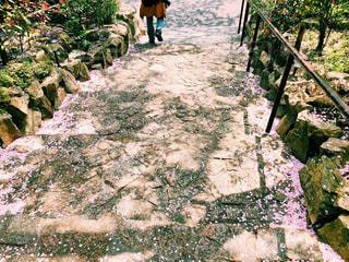 桜の絨毯の写真・画像素材[1108732]