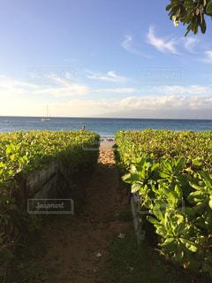 海に続く小道の写真・画像素材[1104283]