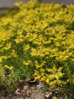 近くの花のアップの写真・画像素材[1194271]