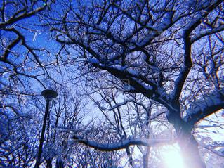 近くの木の写真・画像素材[1087256]