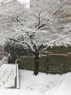 雪の中立つ木の写真・画像素材[1087297]