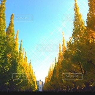 自然の写真・画像素材[13188]