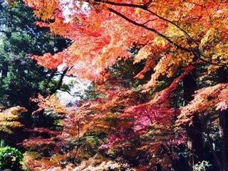 自然の写真・画像素材[13232]