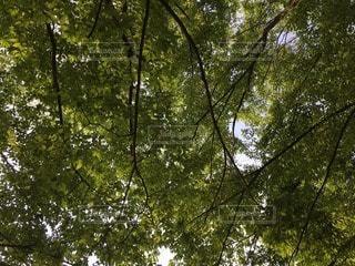 自然の写真・画像素材[114253]
