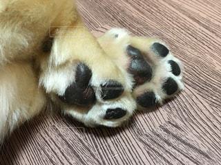 木製の表面の上に横たわる犬の写真・画像素材[900246]