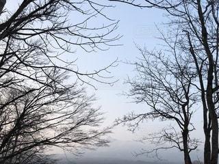 大きな木と山と空の写真・画像素材[1087435]