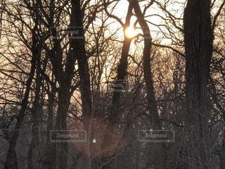 フォレストの木漏れ日の写真・画像素材[1087440]