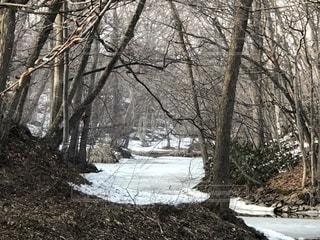 雪の側に木にパス カバー フォレストの写真・画像素材[1087442]