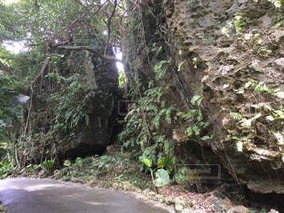 森の中の大きな岩の写真・画像素材[1090672]