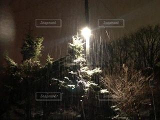 季節はずれな雪の写真・画像素材[1119271]
