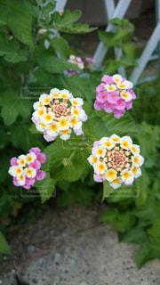 花の写真・画像素材[1089292]