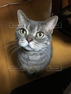 猫の写真・画像素材[38525]