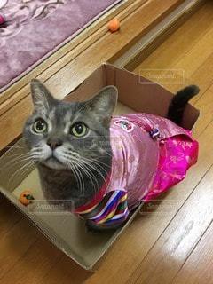 猫の写真・画像素材[38846]