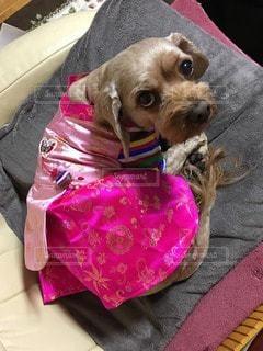 犬の写真・画像素材[38871]
