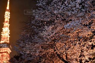 東京タワーと桜の写真・画像素材[1088505]