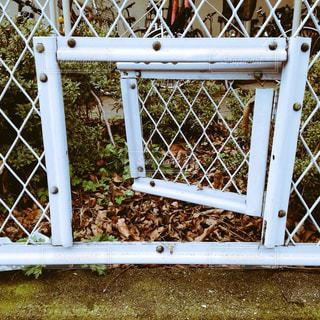 フェンスを抜けての写真・画像素材[1088760]