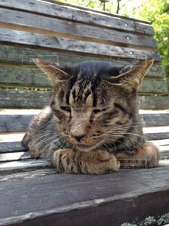 公園のベンチに横になっている猫の写真・画像素材[1088801]