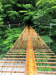 夢の大吊り橋の写真・画像素材[1090003]