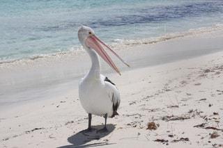 ビーチに立っている鳥の写真・画像素材[1088981]