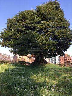 芝生の庭の木 - No.1099428