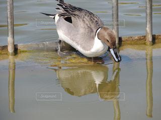 鶴見緑地公園 水鳥の写真・画像素材[1089411]