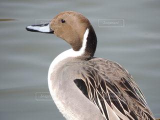 鶴見緑地公園 水鳥の写真・画像素材[1089412]