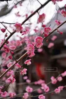 花の写真・画像素材[1091682]