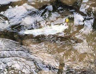 ニジマス釣りの写真・画像素材[3364113]