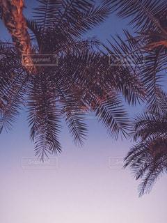 木の横にあるヤシの木のグループの写真・画像素材[2142093]