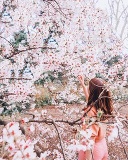 森の前に立っている人の写真・画像素材[2142112]